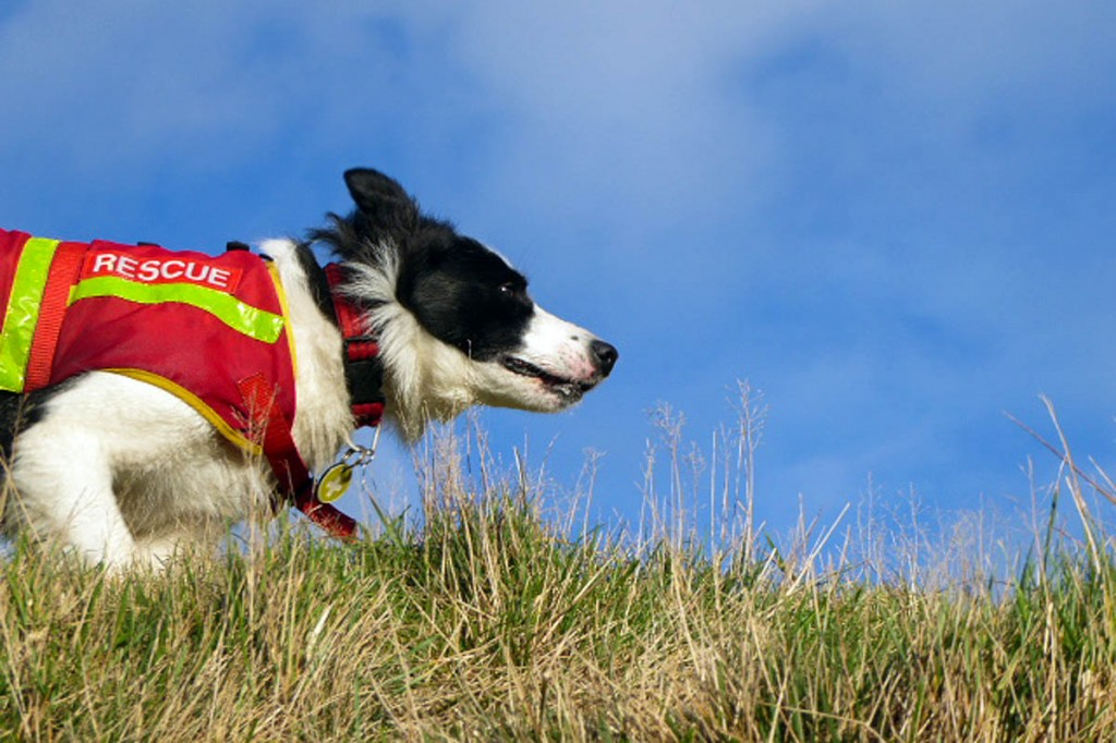 Search dog Tess in action