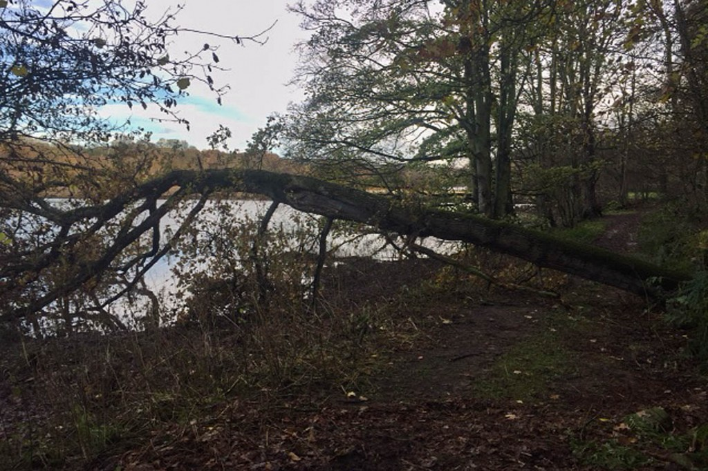 The tree fell on to the point where rescuers had been operating. Photo: Northumberland NPMRT