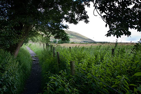 Paths are in danger of becoming overgrown and unusable