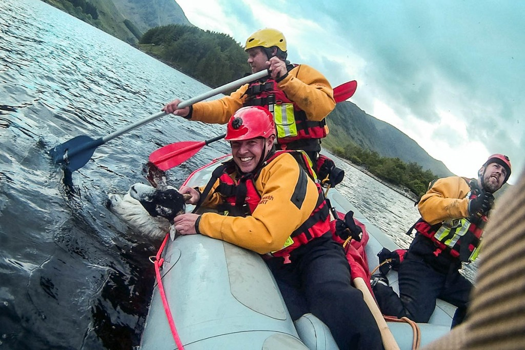 Team members paddle back to shore with the sheep in tow. Photo: Penrith MRT