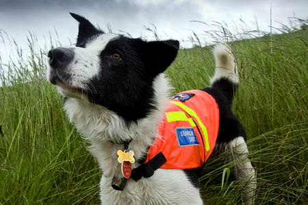 Search dog Sam finds his man