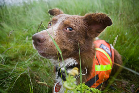 Search dog Ben keeps an eye on his 'body'