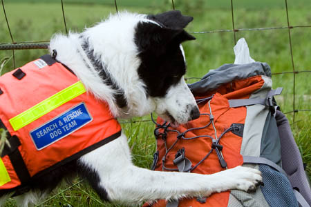 Sam searches, this time for his toy in his handler's rucksack
