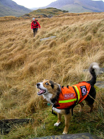 Each dog team costs about £2,000 to equip