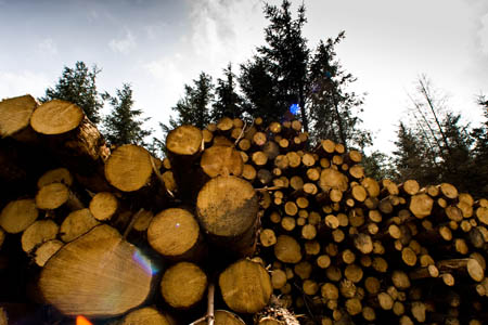 The coalition Government plans to cut England's public forest by a half