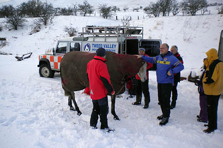 An equine interloper joins rescuers as they are briefed at The Spine rescue. Photo: Tweed Valley MRT