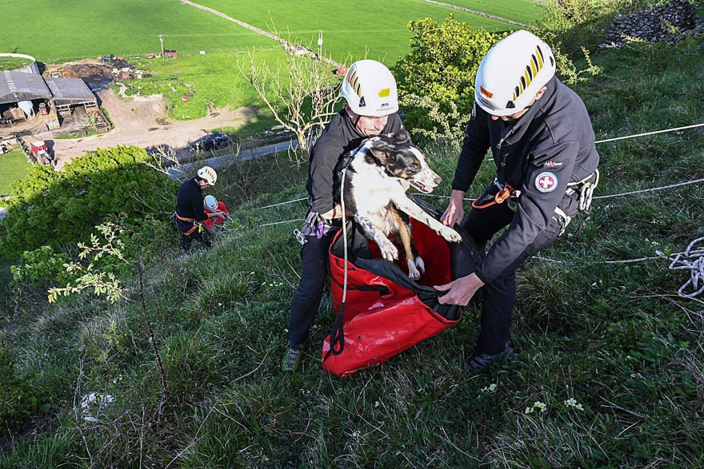 The sheepdog is rescued from the crag. Photo: UWFRA