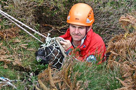 Boxer Sopie is brought to the surface by rescuers. Photo: UWFRA