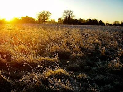 Warneford Meadow. Photo: Afry CC-BY-SA-3.0