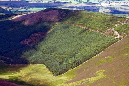 Whinlatter Forest, England's 'only mountain forest'