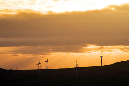 Wind turbine subsidies are 'irresistible'